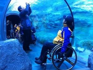 旭山動物園を楽しむ韓国チーム